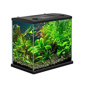 I 5 migliori acquari per pesci rossi con filtro for Filtro vasca pesci rossi